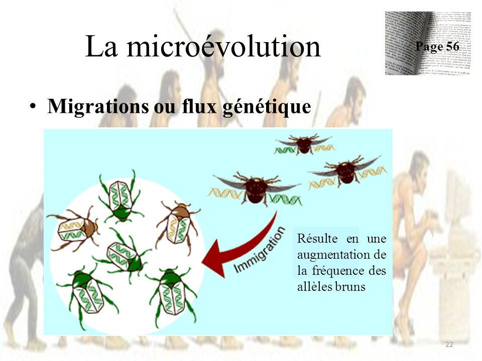 Migrations ou flux génétique La microévolution Page 56 22 Résulte en une augmentation de la fréquence des allèles bruns