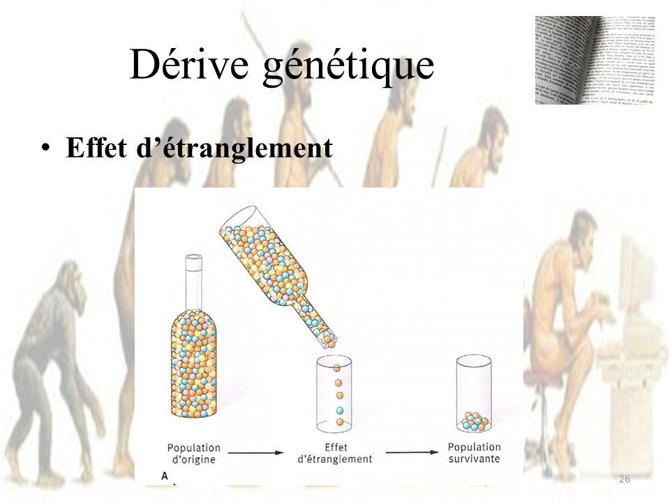 Effet détranglement Dérive génétique 26