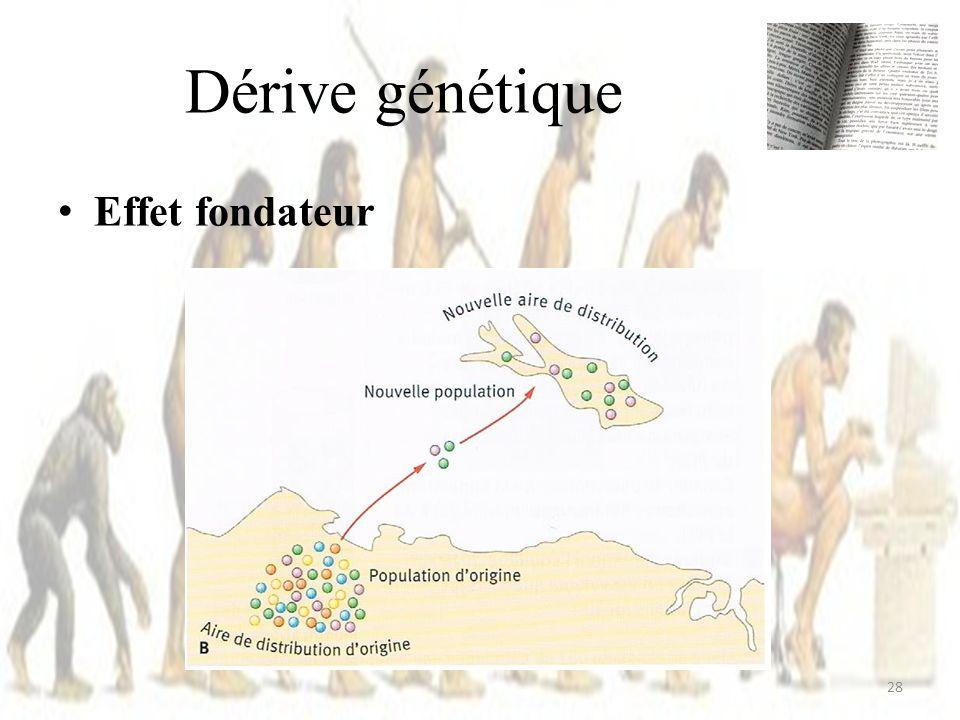 Effet fondateur Dérive génétique 28