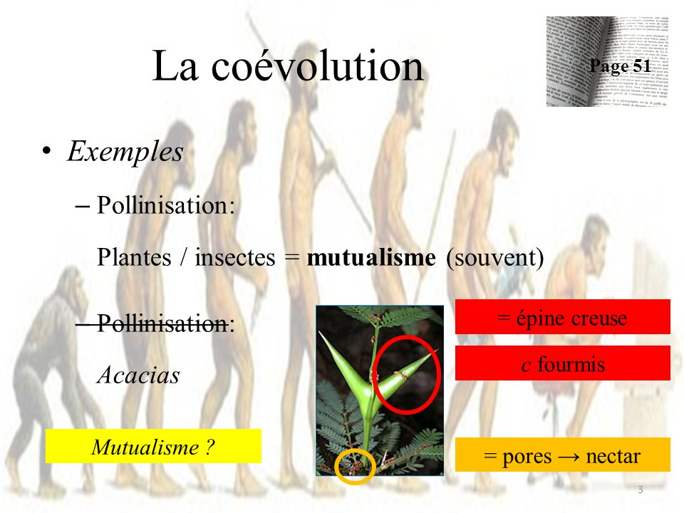 Exemples – Pollinisation: Plantes / insectes = mutualisme (souvent) – Pollinisation: Acacias La coévolution Page 51 3 = épine creuse = pores nectar c