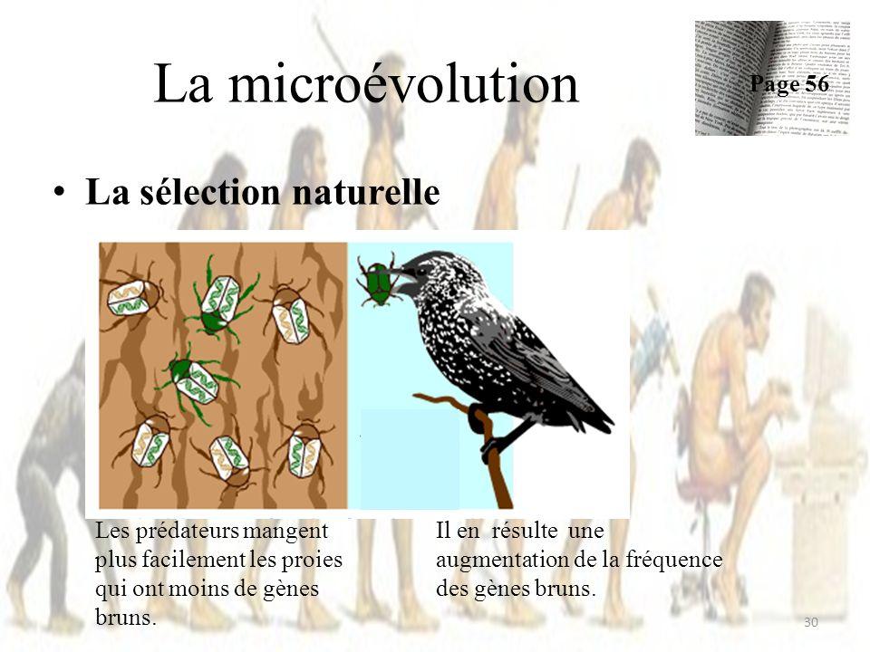 La sélection naturelle La microévolution Page 56 30 Les prédateurs mangent plus facilement les proies qui ont moins de gènes bruns. Il en résulte une