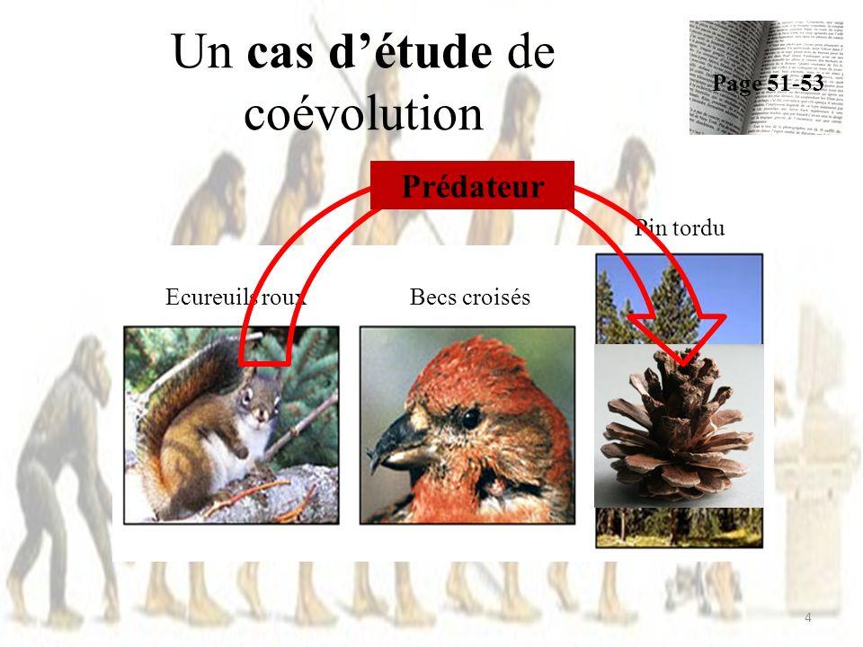 Un cas détude de coévolution Page 51-52 5 Ecureuils rouxBecs croisés Pin tordu Défenses Pommes de pins sont larges, lourdes ( difficiles à transporter) et ont peu de graines 12