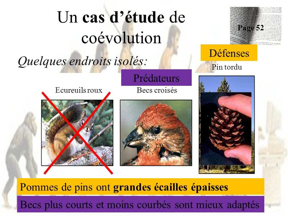Un cas détude de coévolution Page 52 6 Ecureuils rouxBecs croisés Pin tordu Quelques endroits isolés: Prédateurs Défenses Pommes de pins ont grandes é