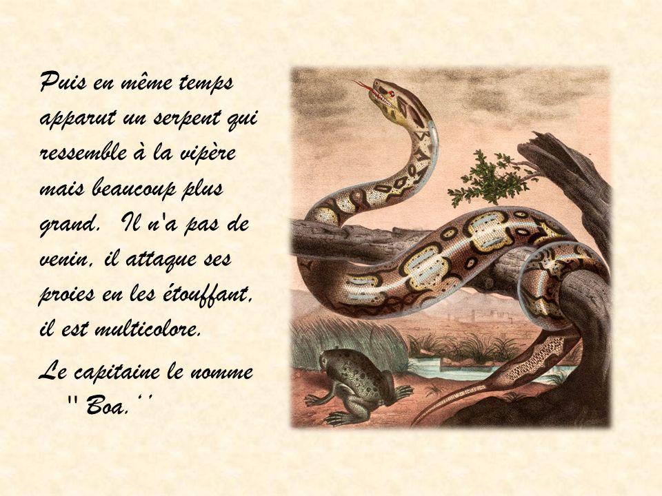 Puis en même temps apparut un serpent qui ressemble à la vipère mais beaucoup plus grand.