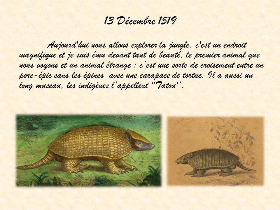 13 Décembre 1519 Aujourd hui nous allons explorer la jungle, c est un endroit magnifique et je suis ému devant tant de beauté, le premier animal que nous voyons et un animal étrange : cest une sorte de croisement entre un porc-épic sans les épines avec une carapace de tortue.