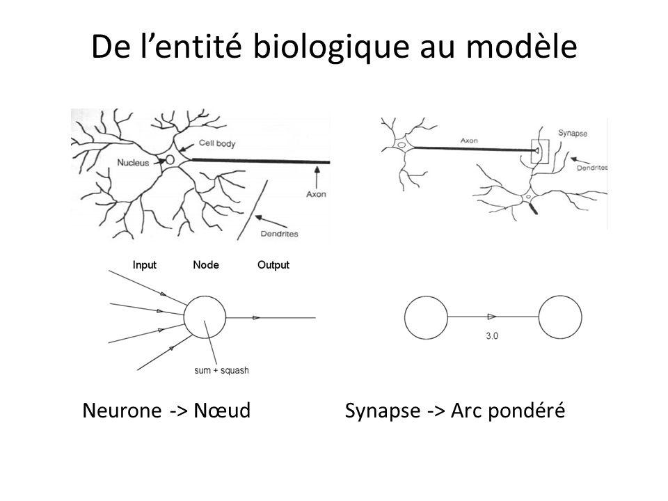 De lentité biologique au modèle Neurone -> Nœud Synapse -> Arc pondéré