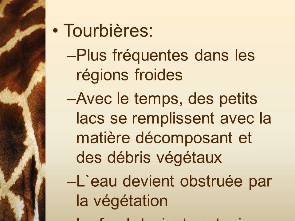 Tourbières: –Plus fréquentes dans les régions froides –Avec le temps, des petits lacs se remplissent avec la matière décomposant et des débris végétau