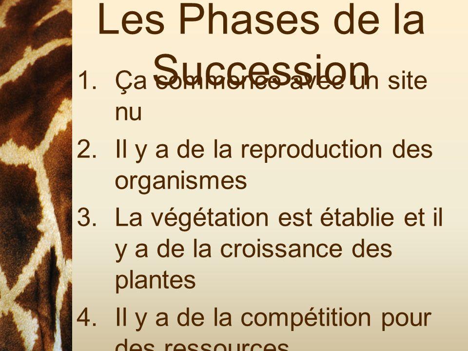 Les Phases de la Succession 1.Ça commence avec un site nu 2.Il y a de la reproduction des organismes 3.La végétation est établie et il y a de la crois