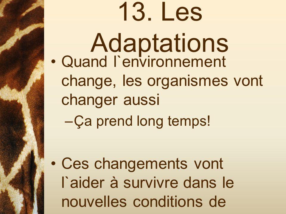 13. Les Adaptations Quand l`environnement change, les organismes vont changer aussi –Ça prend long temps! Ces changements vont l`aider à survivre dans