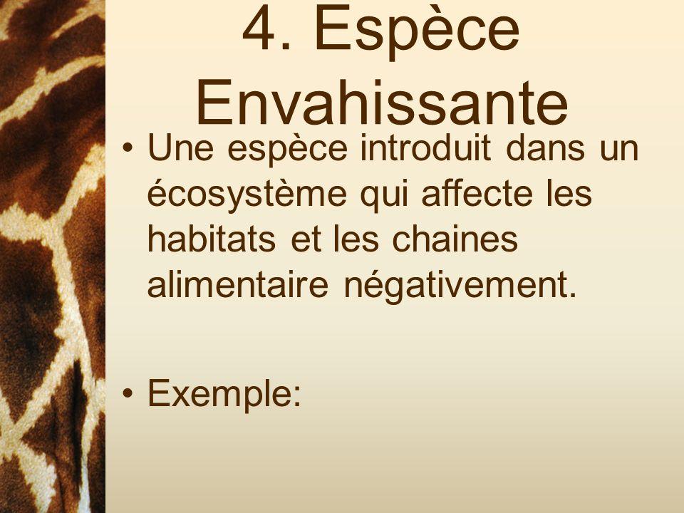 4. Espèce Envahissante Une espèce introduit dans un écosystème qui affecte les habitats et les chaines alimentaire négativement. Exemple: