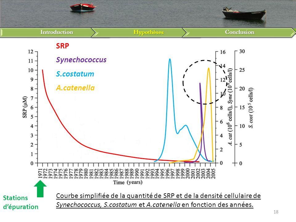 IntroductionHypothèsesConclusion 18 SRP Synechococcus S.costatum A.catenella Stations dépuration Courbe simplifiée de la quantité de SRP et de la dens