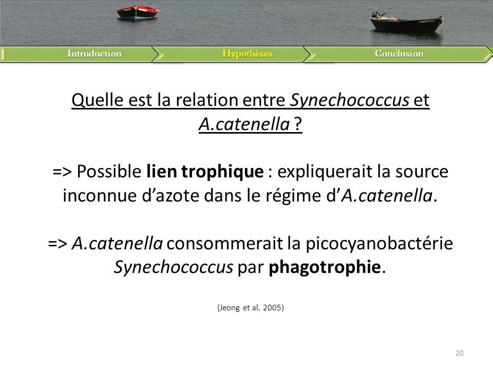IntroductionHypothèsesConclusion 20 Quelle est la relation entre Synechococcus et A.catenella ? => Possible lien trophique : expliquerait la source in