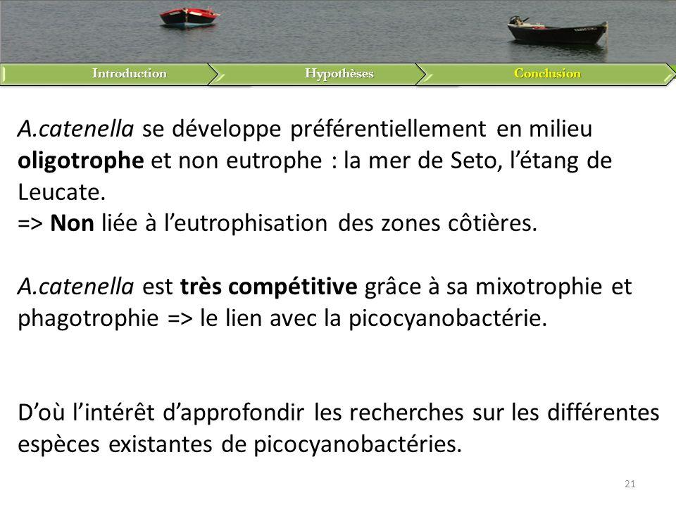IntroductionHypothèsesConclusion 21 A.catenella se développe préférentiellement en milieu oligotrophe et non eutrophe : la mer de Seto, létang de Leuc