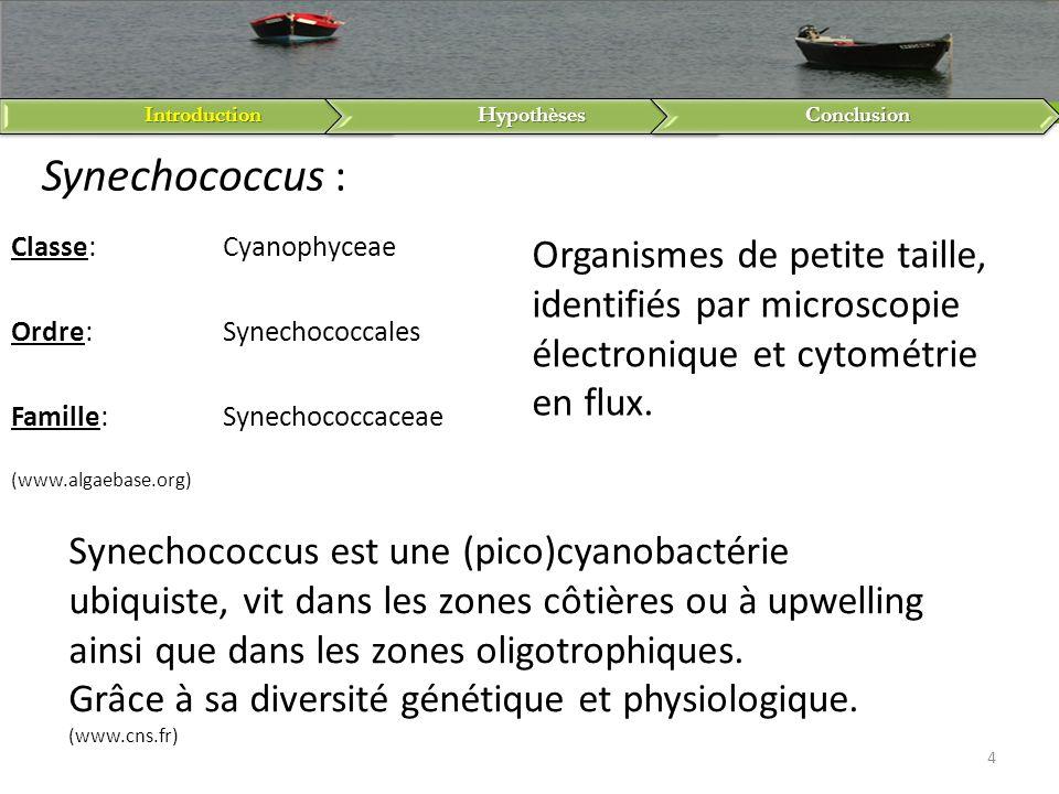 IntroductionHypothèsesConclusion 4 Synechococcus est une (pico)cyanobactérie ubiquiste, vit dans les zones côtières ou à upwelling ainsi que dans les