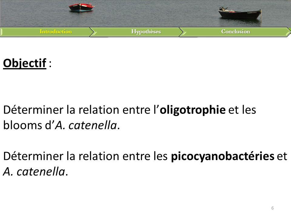 IntroductionHypothèsesConclusion 6 Objectif : Déterminer la relation entre loligotrophie et les blooms dA. catenella. Déterminer la relation entre les