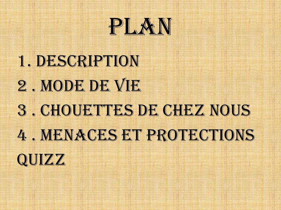 Plan 1. Description 2. Mode de vie 3. Chouettes de chez nous 4. Menaces et protections Quizz