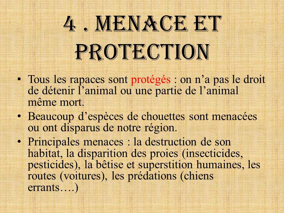 4. Menace et protection Tous les rapaces sont protégés : on na pas le droit de détenir lanimal ou une partie de lanimal même mort. Beaucoup despèces d
