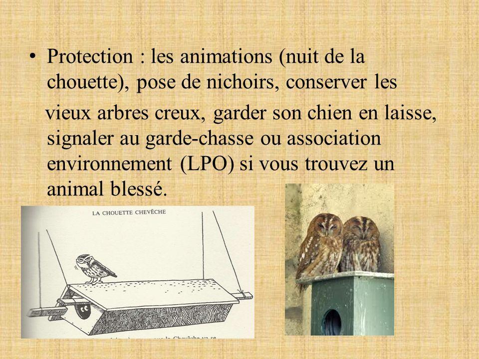 Protection : les animations (nuit de la chouette), pose de nichoirs, conserver les vieux arbres creux, garder son chien en laisse, signaler au garde-c