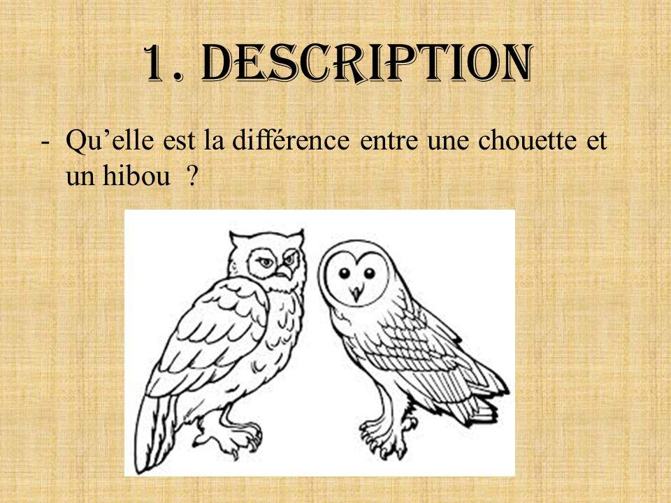 1. Description -Quelle est la différence entre une chouette et un hibou ?