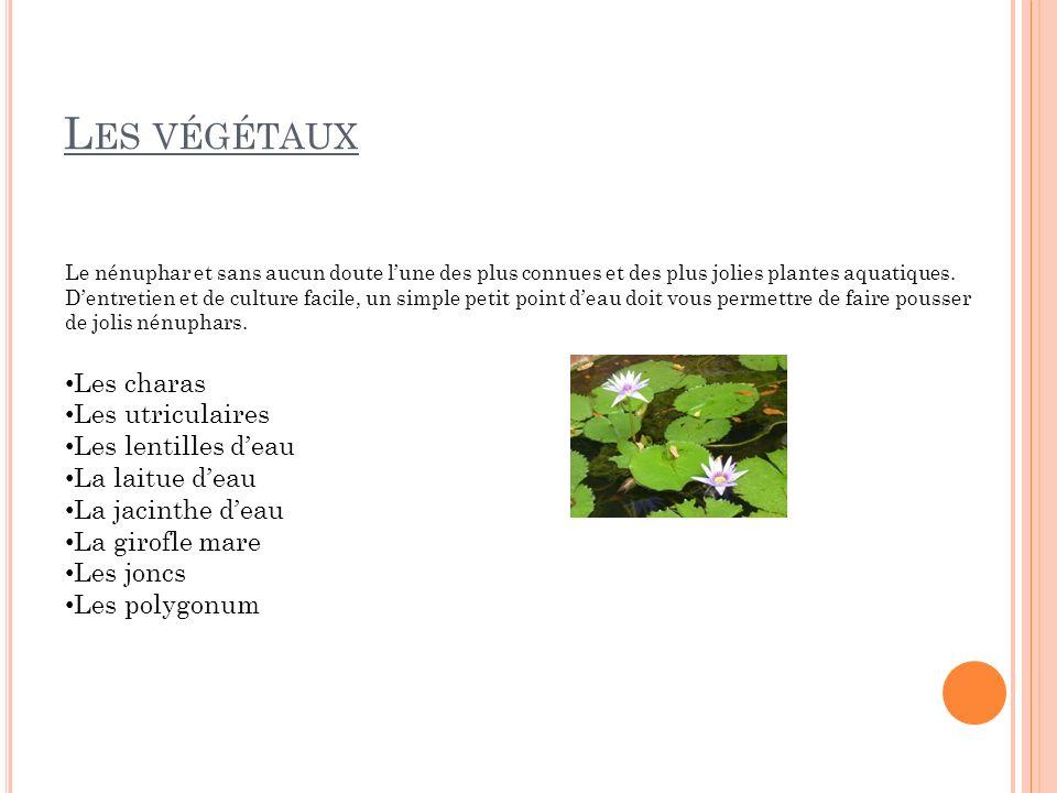 L ES VÉGÉTAUX Le nénuphar et sans aucun doute lune des plus connues et des plus jolies plantes aquatiques. Dentretien et de culture facile, un simple