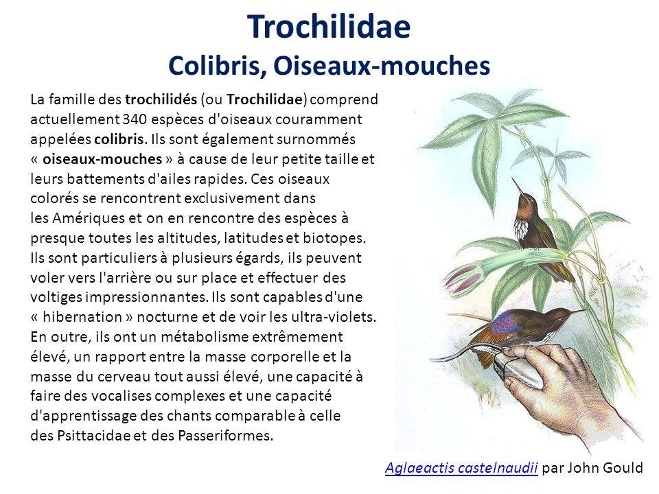 La famille des trochilidés (ou Trochilidae) comprend actuellement 340 espèces d oiseaux couramment appelées colibris.