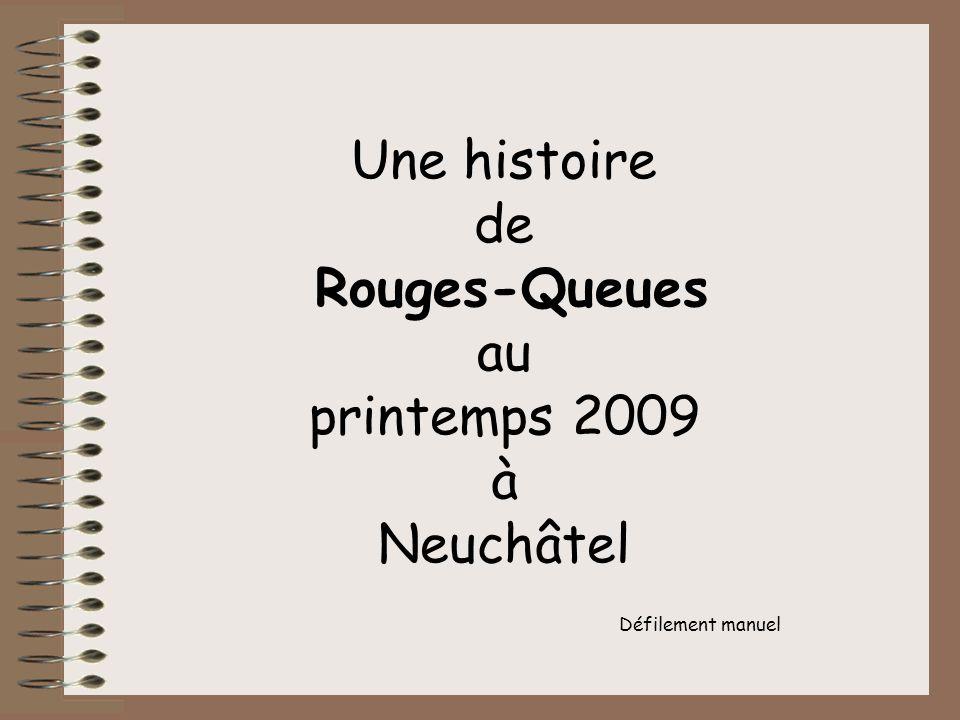 Une histoire de Rouges-Queues au printemps 2009 à Neuchâtel Défilement manuel