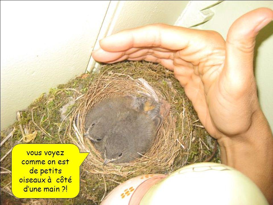 vous voyez comme on est de petits oiseaux à côté dune main ?!