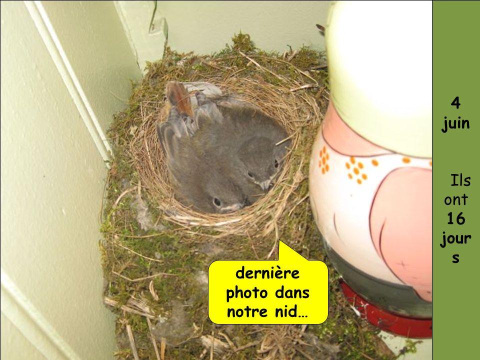 dernière photo dans notre nid… 4 juin Ils ont 16 jour s