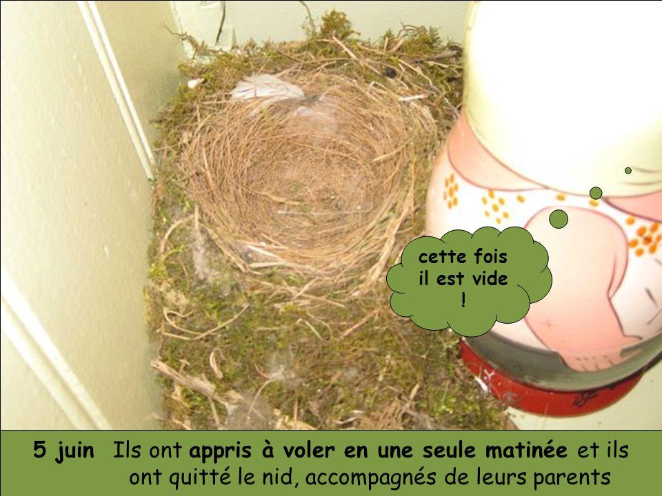 5 juin Ils ont appris à voler en une seule matinée et ils ont quitté le nid, accompagnés de leurs parents cette fois il est vide !
