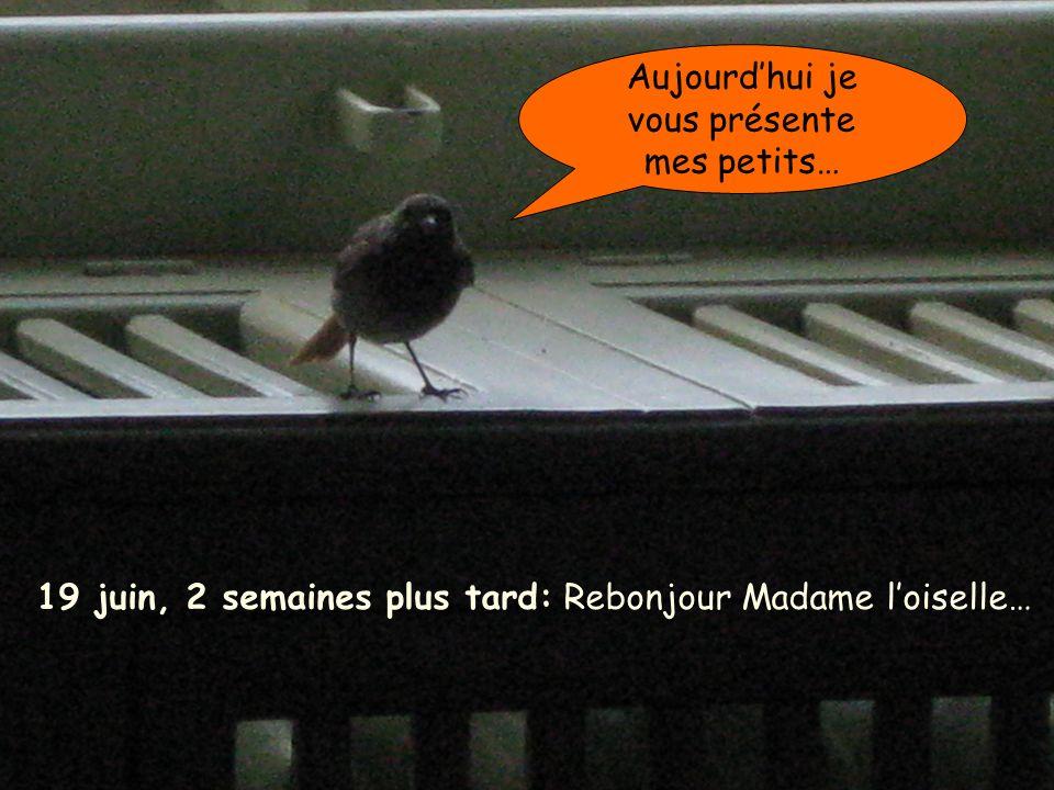19 juin, 2 semaines plus tard: Rebonjour Madame loiselle… Aujourdhui je vous présente mes petits…