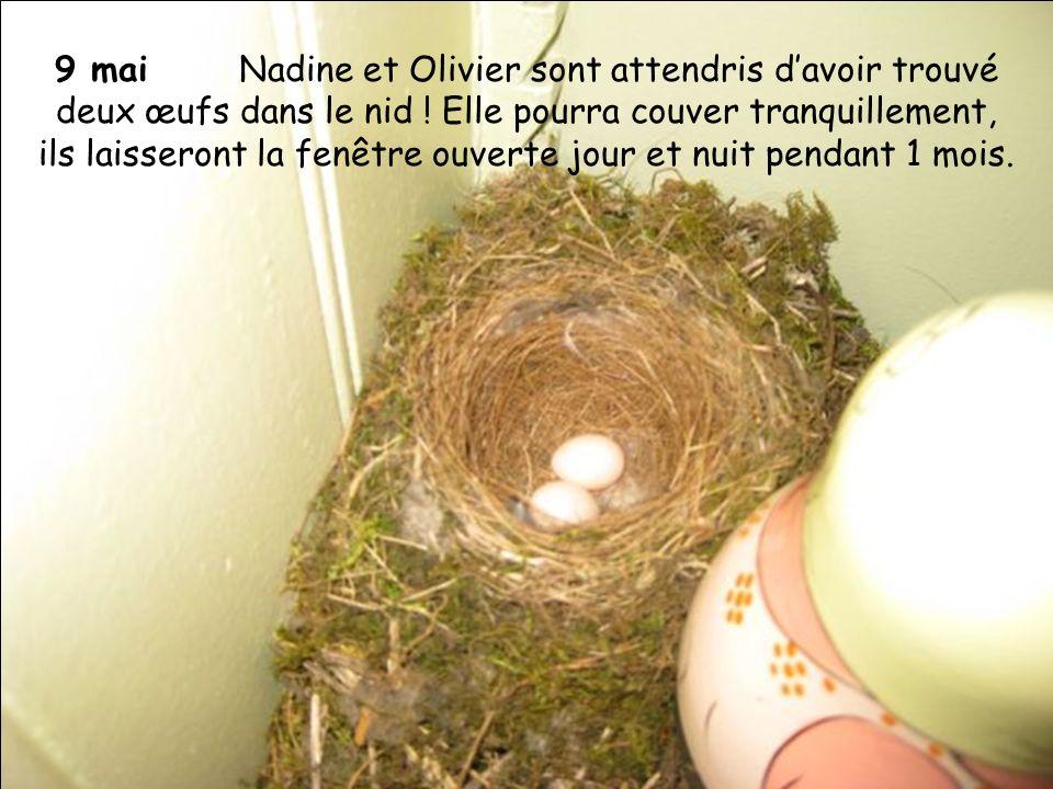 9 mai Nadine et Olivier sont attendris davoir trouvé deux œufs dans le nid ! Elle pourra couver tranquillement, ils laisseront la fenêtre ouverte jour