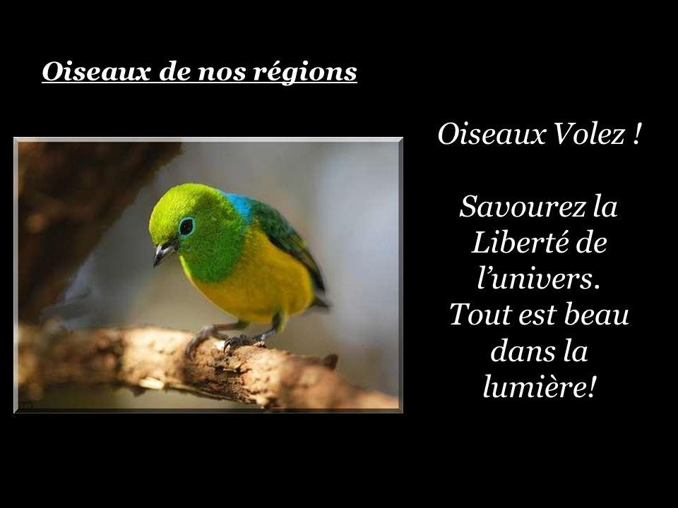 Oiseaux Volez .Savourez la Liberté de lunivers. Tout est beau dans la lumière.