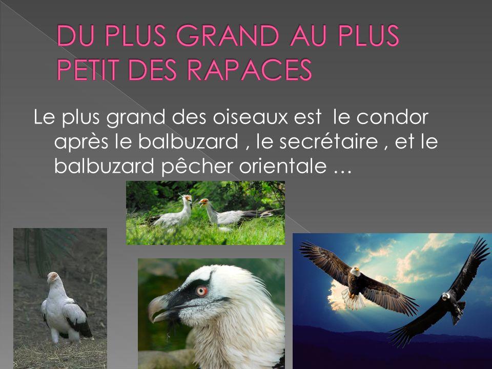 Le plus grand des oiseaux est le condor après le balbuzard, le secrétaire, et le balbuzard pêcher orientale …