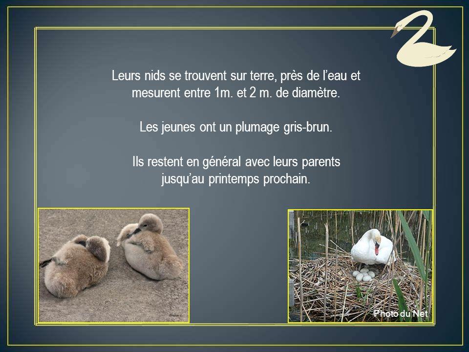 Leurs nids se trouvent sur terre, près de leau et mesurent entre 1m.