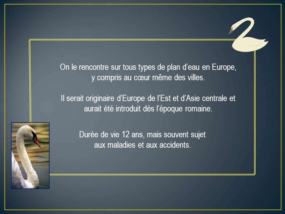 On le rencontre sur tous types de plan deau en Europe, y compris au cœur même des villes.