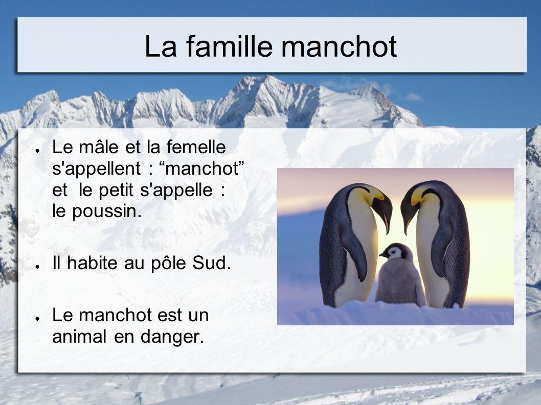 La famille manchot Le mâle et la femelle s'appellent : manchot et le petit s'appelle : le poussin. Il habite au pôle Sud. Le manchot est un animal en