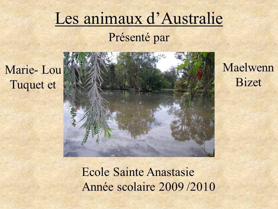 Les animaux dAustralie Présenté par Marie- Lou Tuquet et Maelwenn Bizet Ecole Sainte Anastasie Année scolaire 2009 /2010