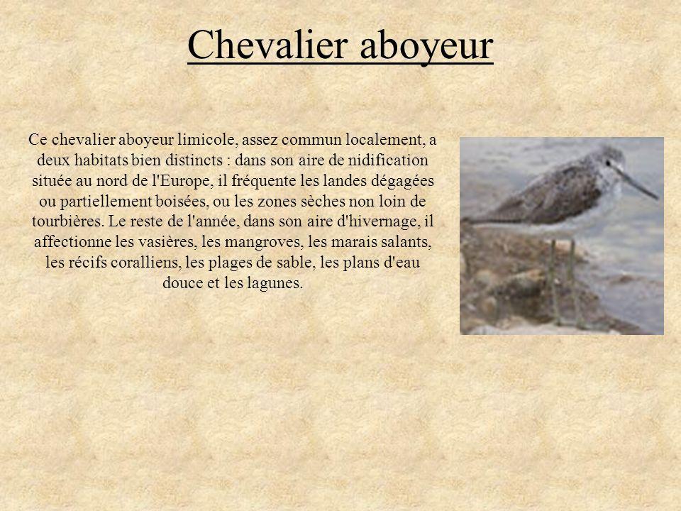 Chevalier aboyeur Ce chevalier aboyeur limicole, assez commun localement, a deux habitats bien distincts : dans son aire de nidification située au nor