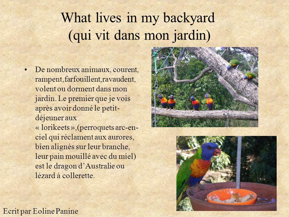 What lives in my backyard (qui vit dans mon jardin) De nombreux animaux, courent, rampent,farfouillent,ravaudent, volent ou dorment dans mon jardin. L