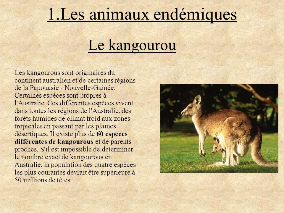 1.Les animaux endémiques Les kangourous sont originaires du continent australien et de certaines régions de la Papouasie - Nouvelle-Guinée. Certaines