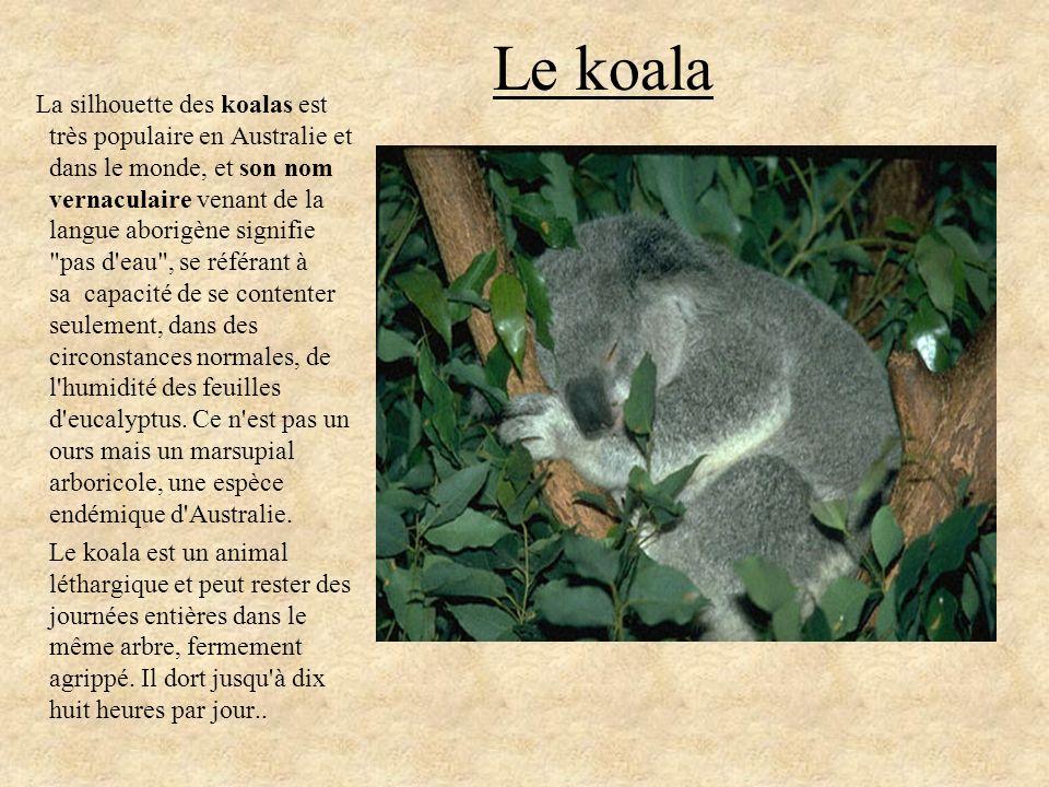 Le koala La silhouette des koalas est très populaire en Australie et dans le monde, et son nom vernaculaire venant de la langue aborigène signifie