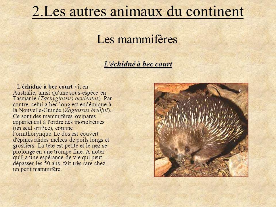 2.Les autres animaux du continent L'échidné à bec court vit en Australie, ainsi qu'une sous-espèce en Tasmanie (Tachyglossus aculeatus). Par contre, c