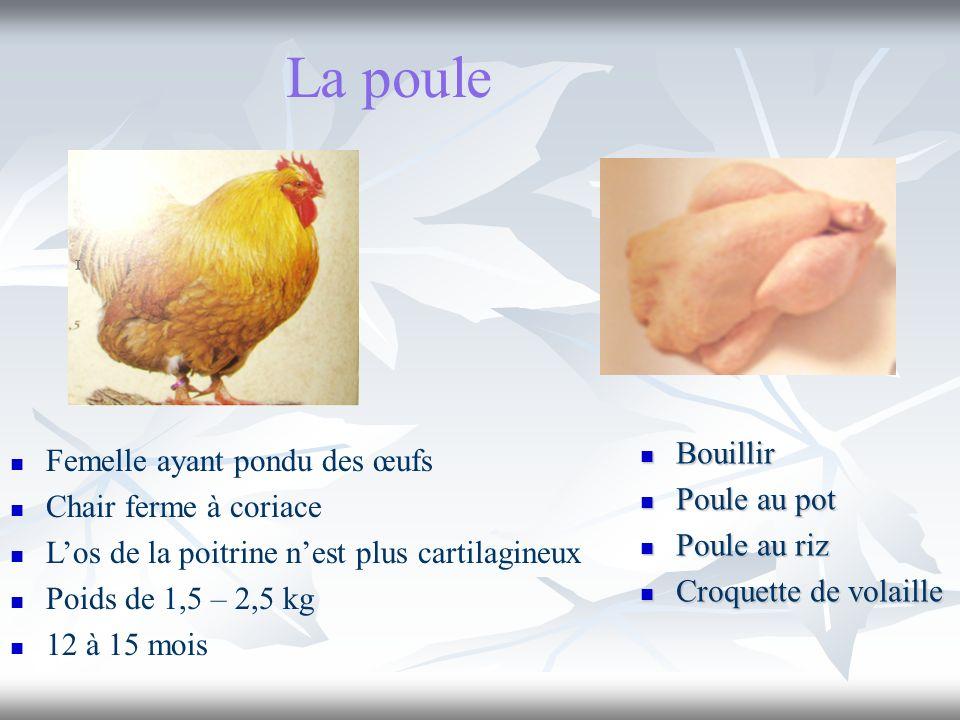La poule Bouillir Bouillir Poule au pot Poule au pot Poule au riz Poule au riz Croquette de volaille Croquette de volaille Femelle ayant pondu des œuf