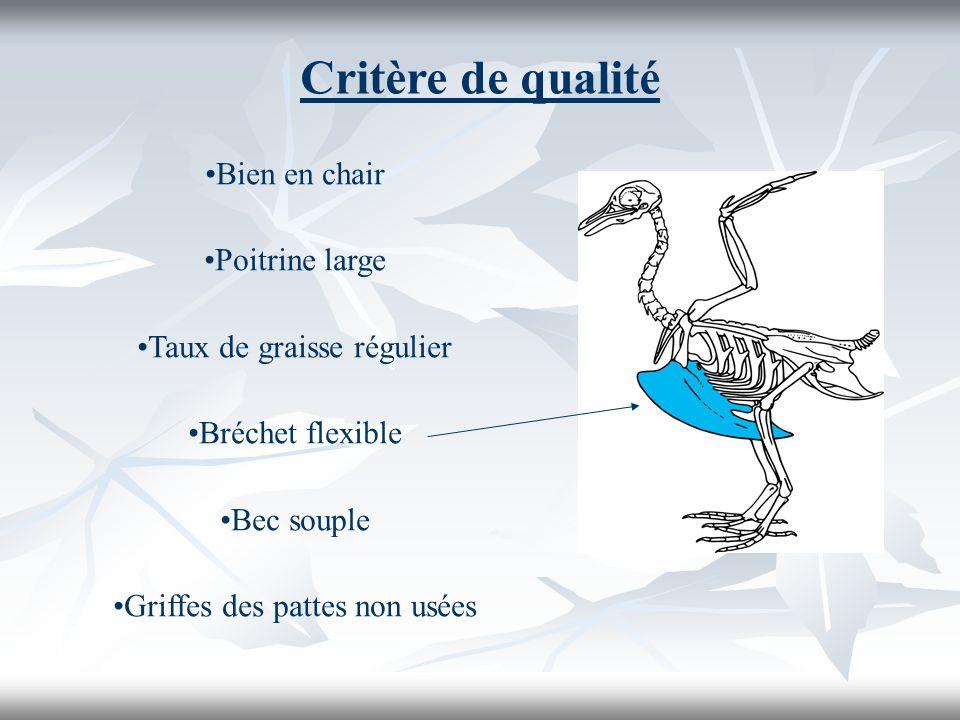 Critère de qualité Bien en chair Poitrine large Taux de graisse régulier Bréchet flexible Bec souple Griffes des pattes non usées