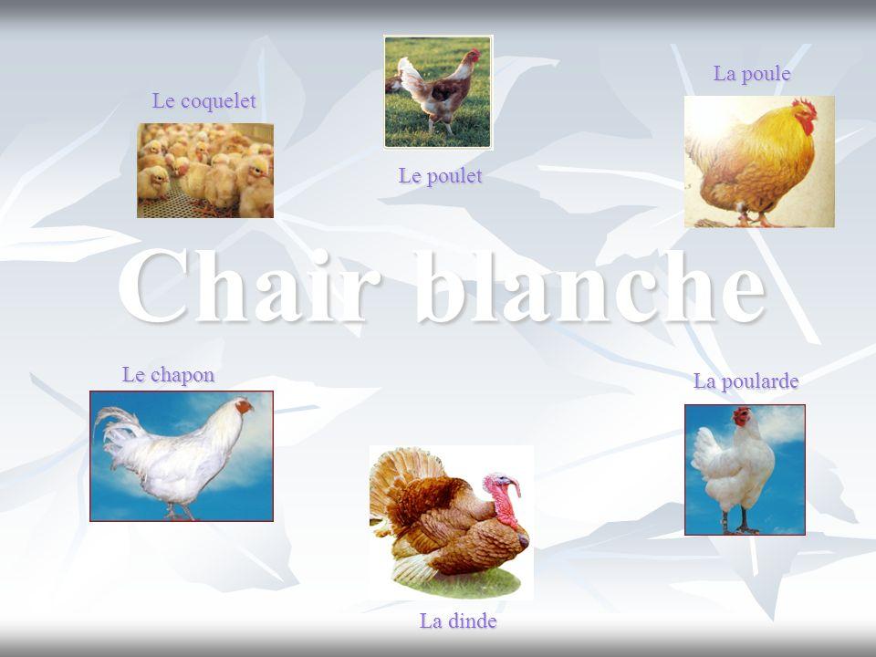 Chair blanche Le coquelet La dinde Le poulet La poularde Le chapon La poule