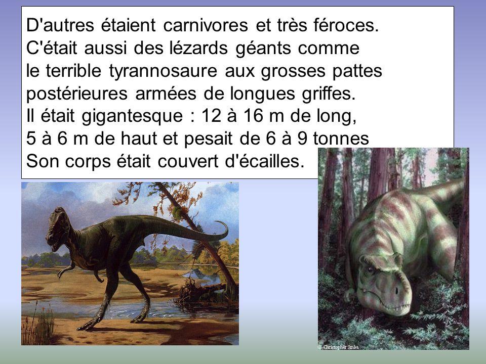D'autres étaient carnivores et très féroces. C'était aussi des lézards géants comme le terrible tyrannosaure aux grosses pattes postérieures armées de