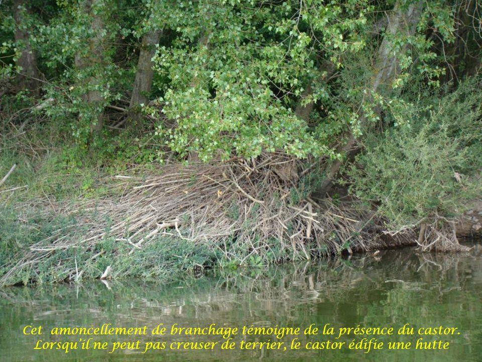 Jean-Philippe, lun de nos deux bateliers, nous fait partager sa connaissance de la marine fluviale