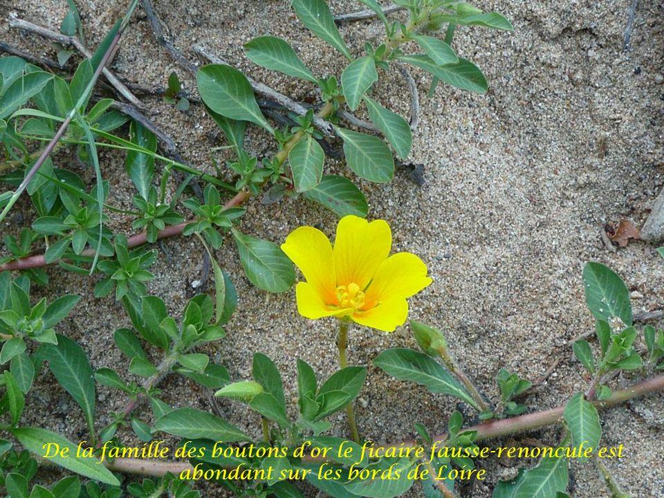 Arrêt à mi-parcours sur la terre ferme où Jean-François nous présente la faune et la flore du fleuve