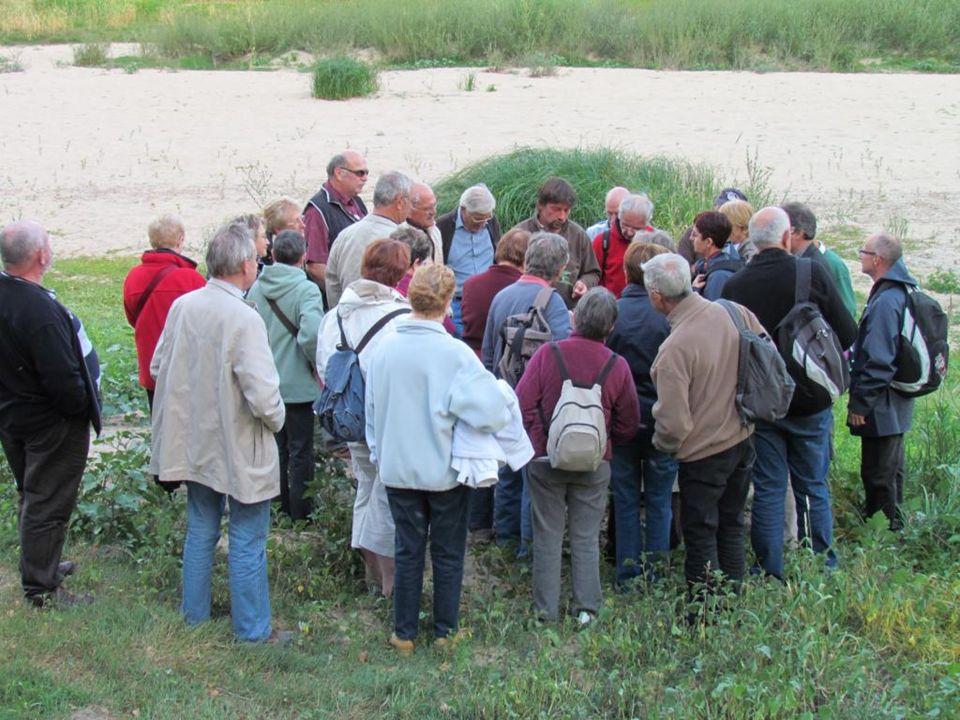 De la famille des boutons dor le ficaire fausse-renoncule est abondant sur les bords de Loire