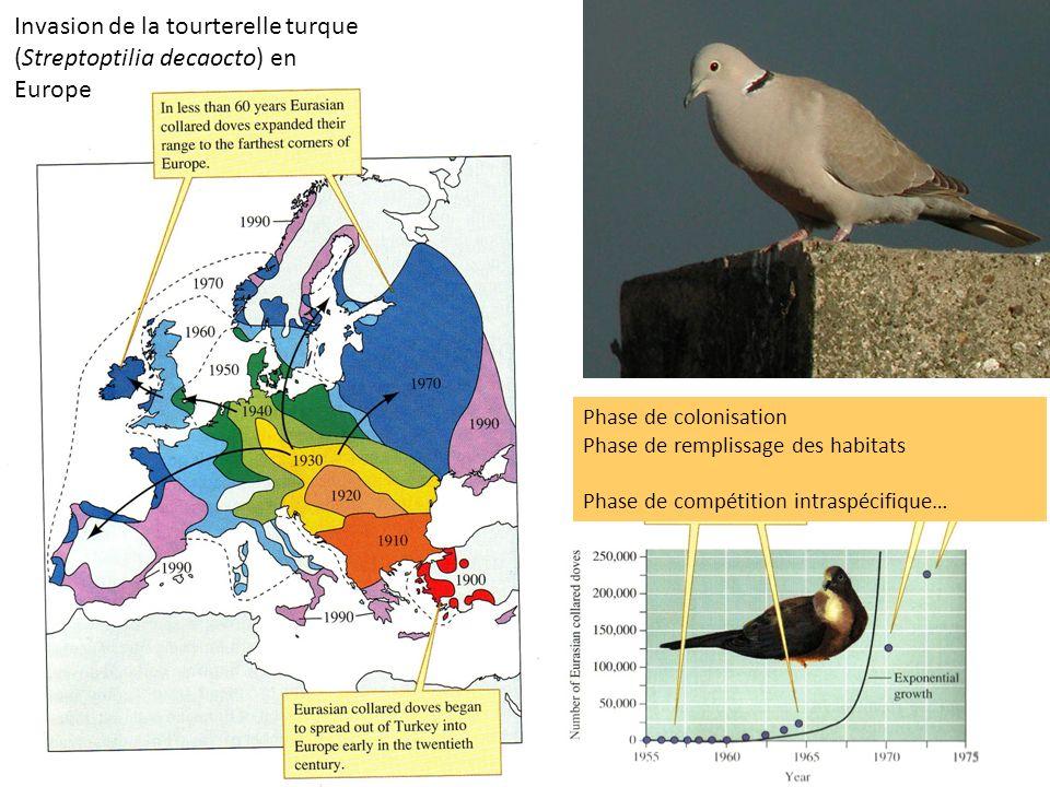 Invasion de la tourterelle turque (Streptoptilia decaocto) en Europe Phase de colonisation Phase de remplissage des habitats Phase de compétition intr